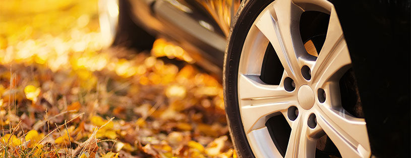 tyres rims autumn leaves